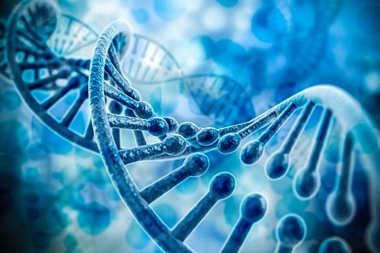 Outras evidências apóiam a alegação controversa de que os genes SARS-CoV-2 podem se integrar ao DNA humano
