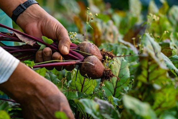 Planalto norte de SC precisa fortalecer o agronegócio para fomentar comércio e serviços