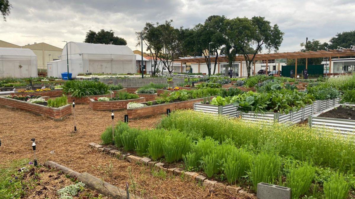 Prefeituras de Florianópolis e Curitiba planejam convênio para troca de experiências de compostagem e agricultura urbana