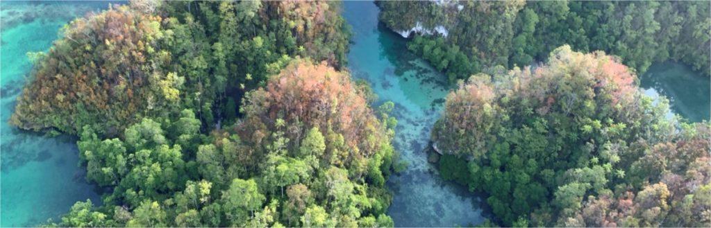 Pesquisadores desvendam a mais rica flora insular do mundo