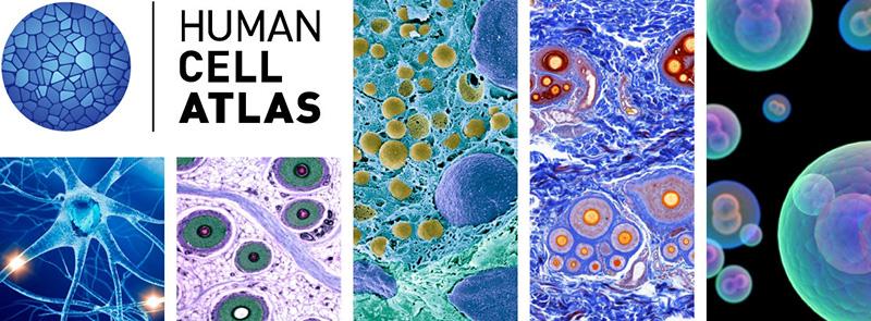 Projeto que mapeia células humanas quer expandir presença na América Latina