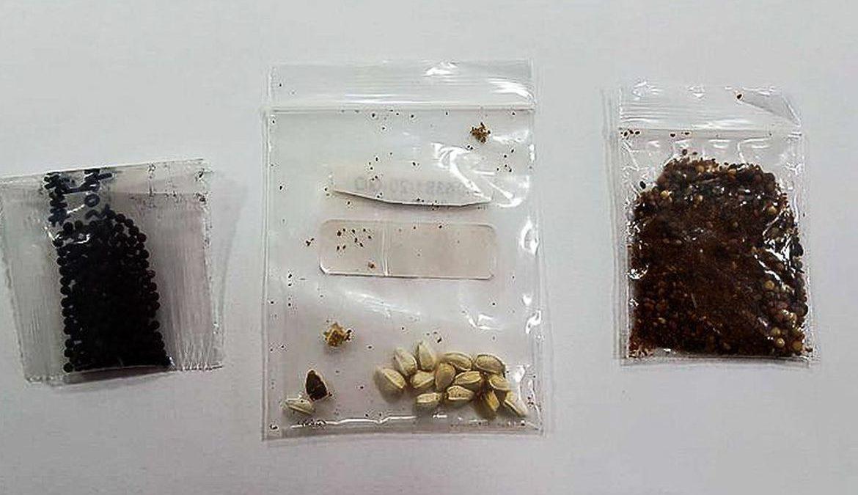 MA e AM são únicos a não registrar entrega de sementes vindas da Ásia