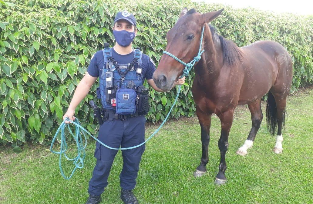 GMF encontra cavalo solto em avenida em Florianópolis