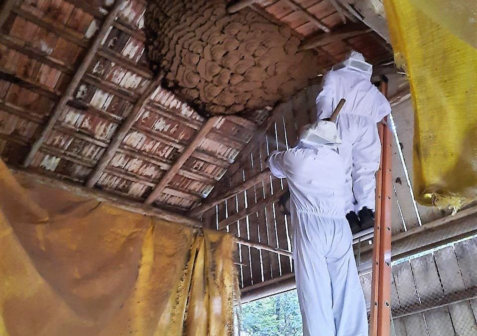 Bombeiros retiram ninho gigante de vespas no Oeste Catarinense