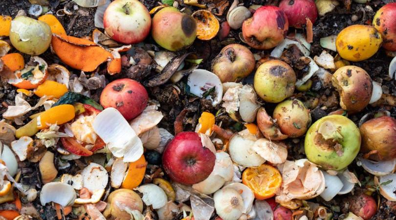 Quase 1 bilhão de toneladas de alimentos foi desperdiçada em 2019, alerta ONU
