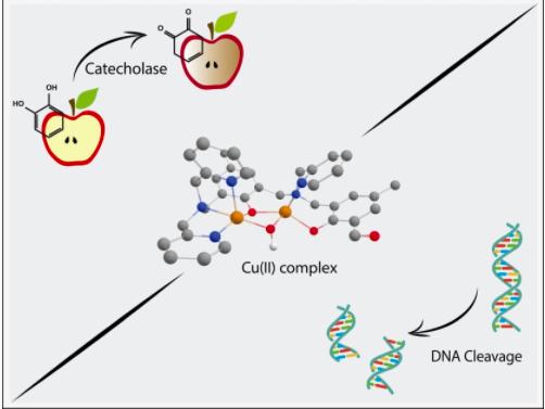 Pesquisa da UFSC e Udesc resulta em composto que pode auxiliar em diagnóstico médico e interagir com DNA
