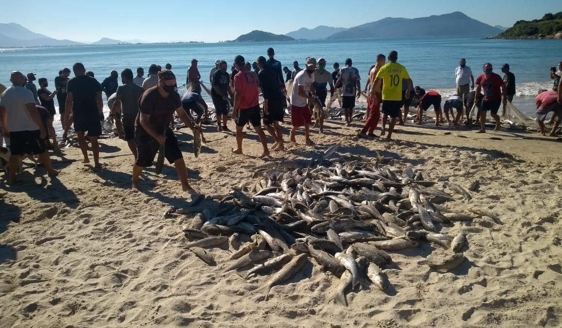 """Elas chegaram"""", afirmam pescadores sobre aproximação das tainhas ao litoral de Palhoça na Grande Florianópolis"""