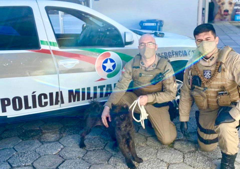 Polícia Militar resgata cachorro em situação de maus-tratos em Florianópolis