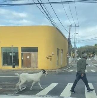 Homem e seu animal de estimação no centro de Florianópolis