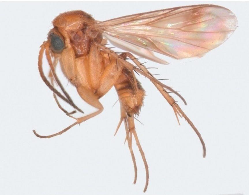 Após 15 anos de pesquisas, cientistas reconstroem evolução de grupos de mosquitos da era dos dinossauros